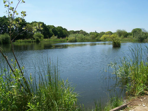Specimen Fishing Lake - East Yorkshire